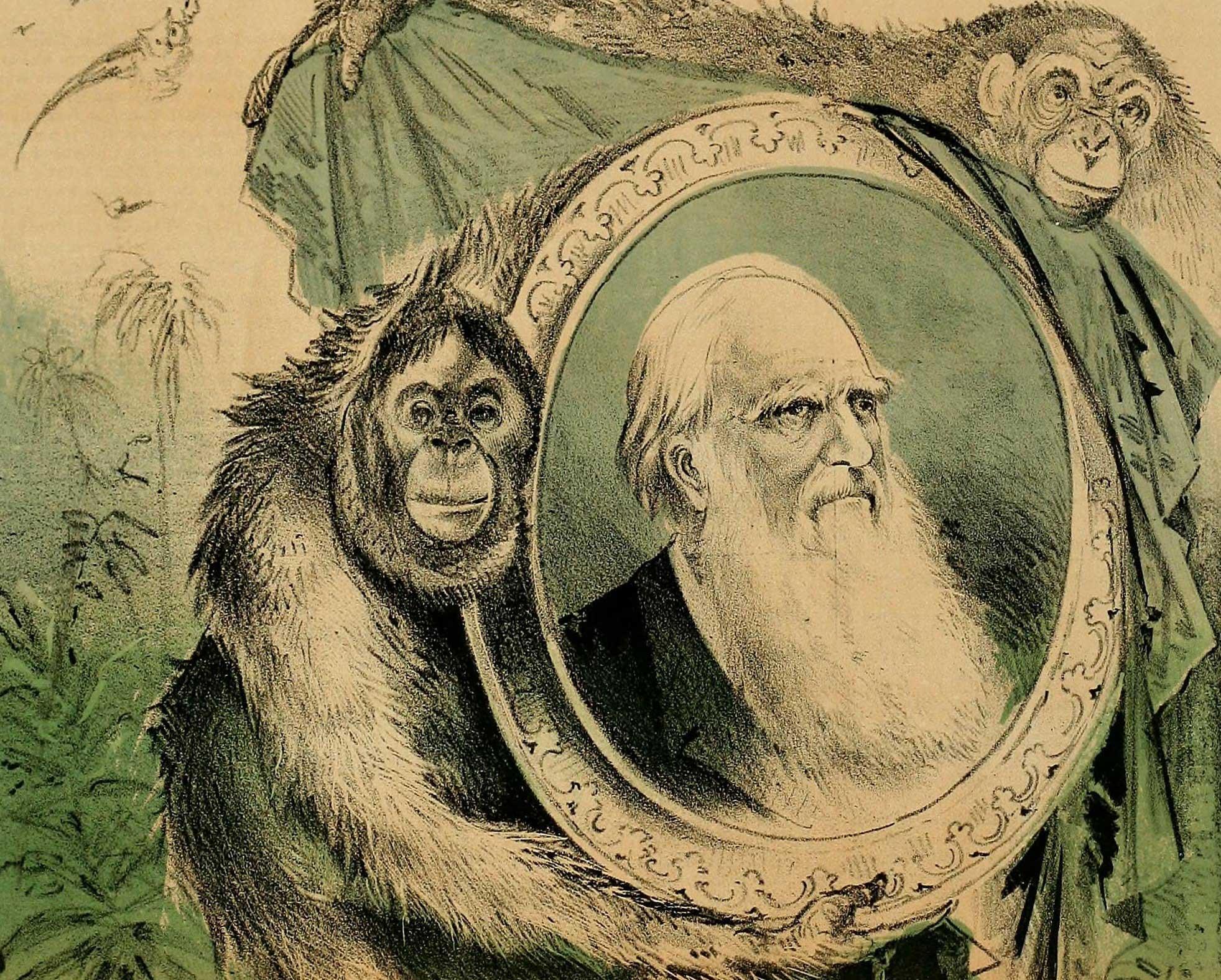 Эволюция — что это такое и какие этапы развития известны человеку