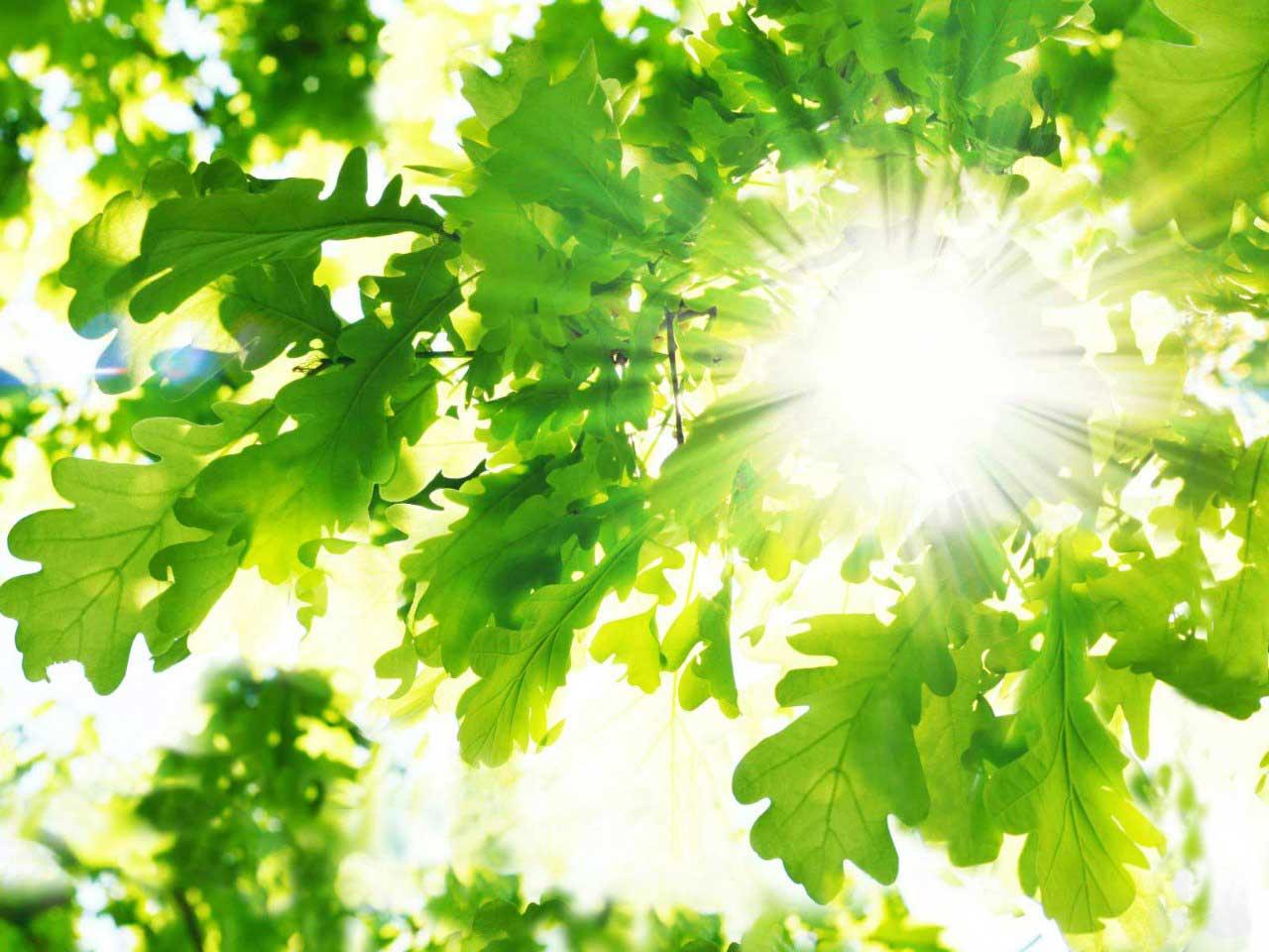 деоевья-в-солнечный-день-радуют-душу