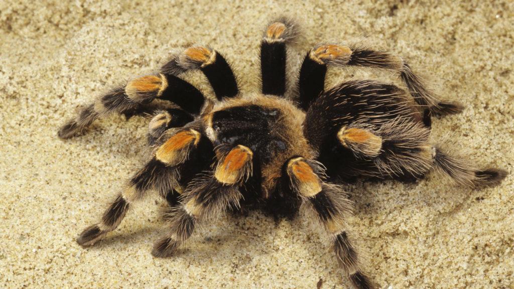 к чему сняться пауки
