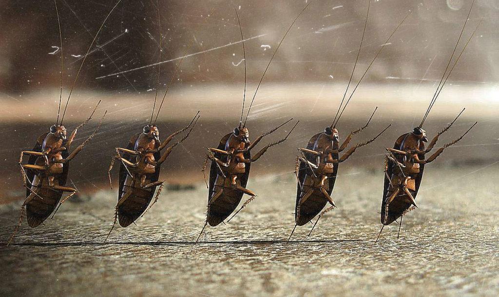 к чему сняться тараканы