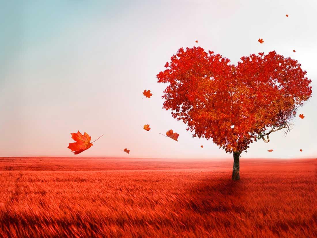 Любовь — что это такое за чувство?