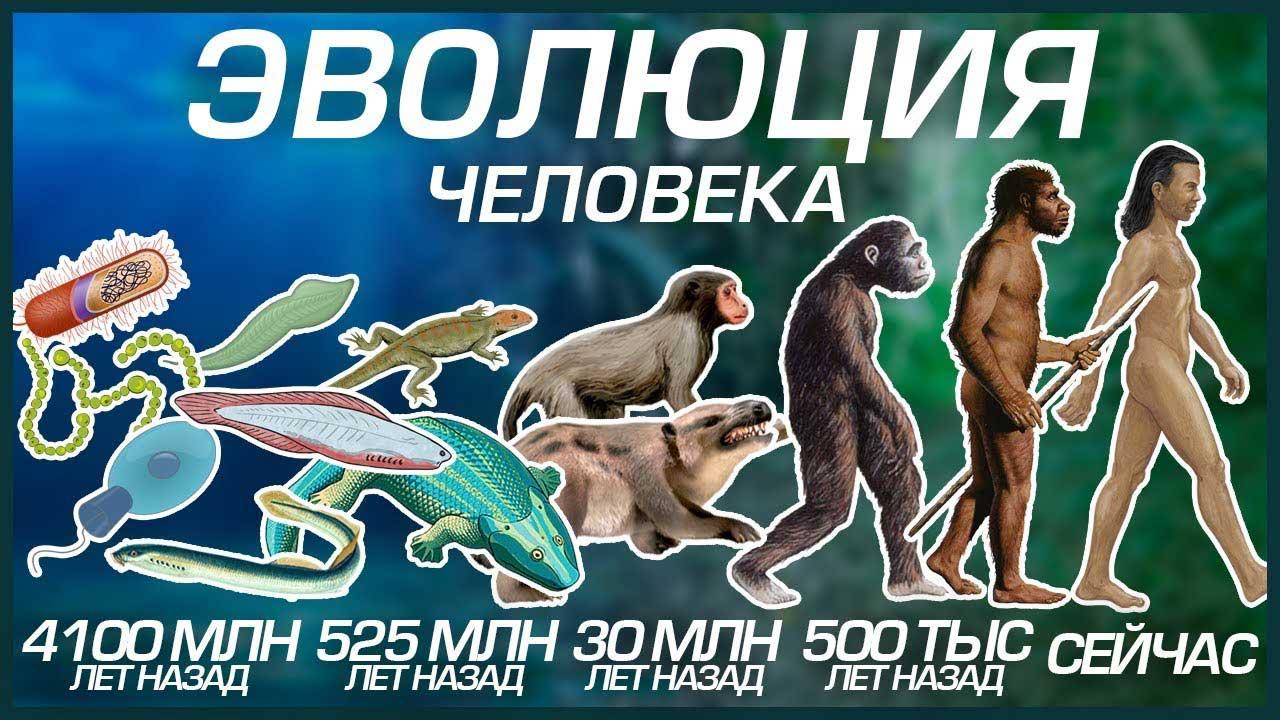 эволюционный-процесс