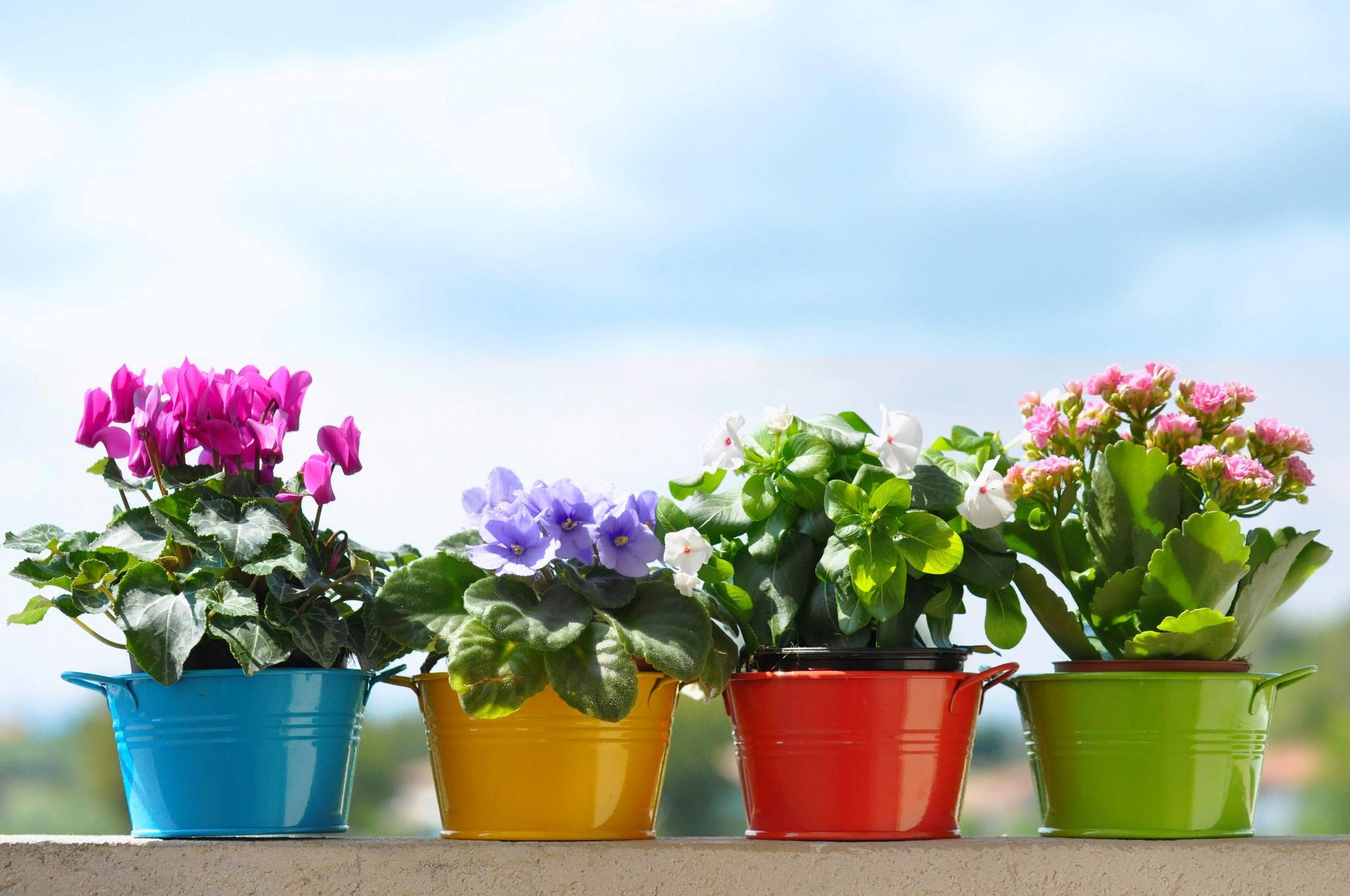25 видов запрещенных цветов: почему их нельзя держать дома и какие приметы существуют