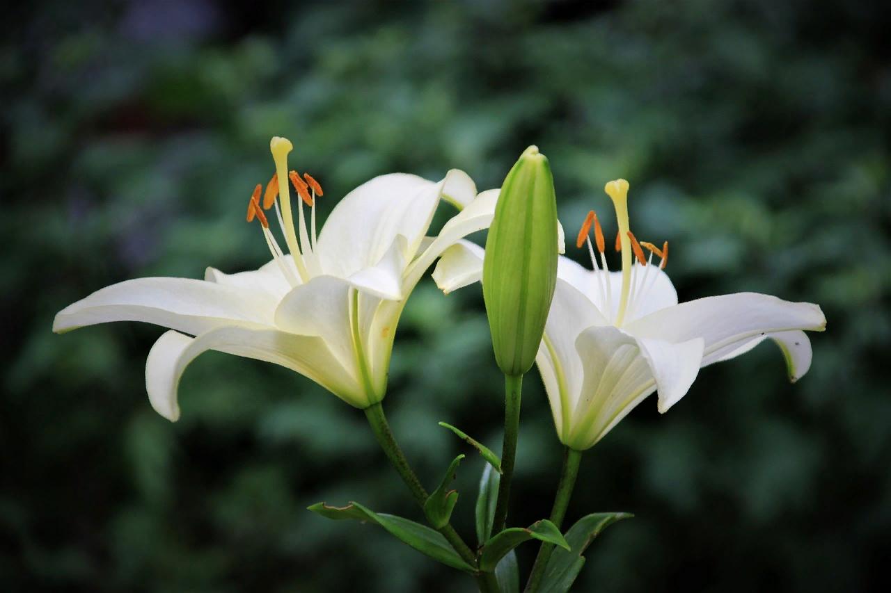 какие домашние цветы нельзя держать дома