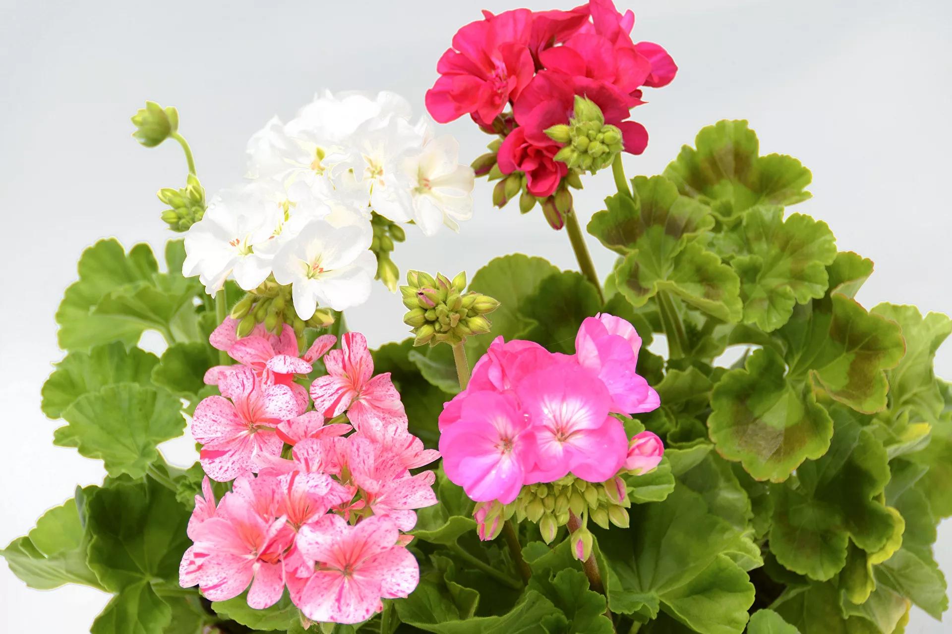 какие цветы нельзя сажать дома