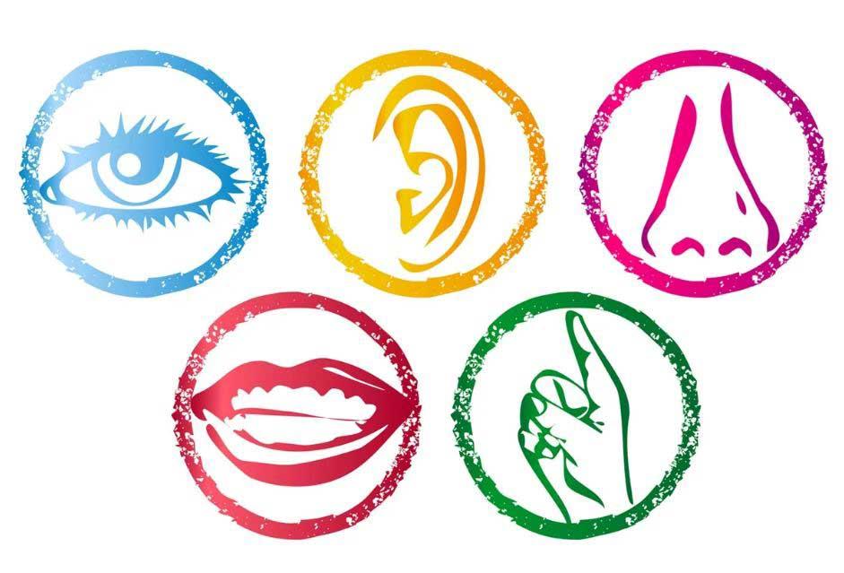 5-органов-чувств-человека, Какие бывают чувства