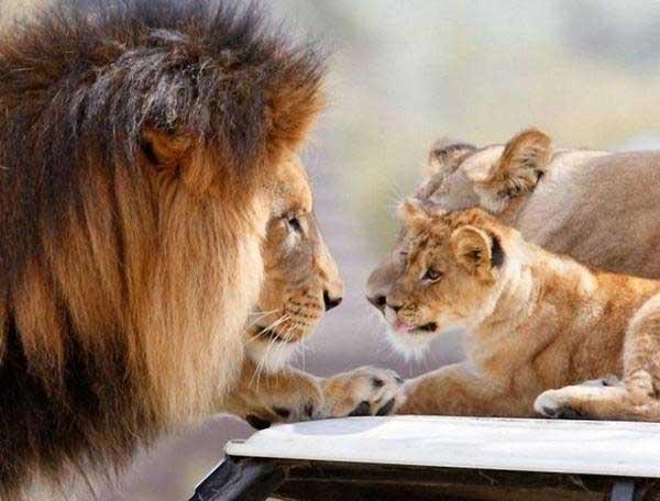 животные любят так же, как и люди, даже сильнее
