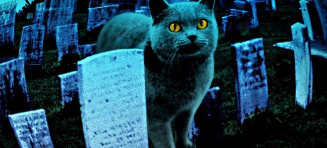Приметы про умерших животных о которых стоит знать!