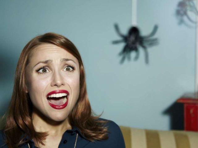 Увидеть паука утром, вечером или ночью: суеверия и приметы